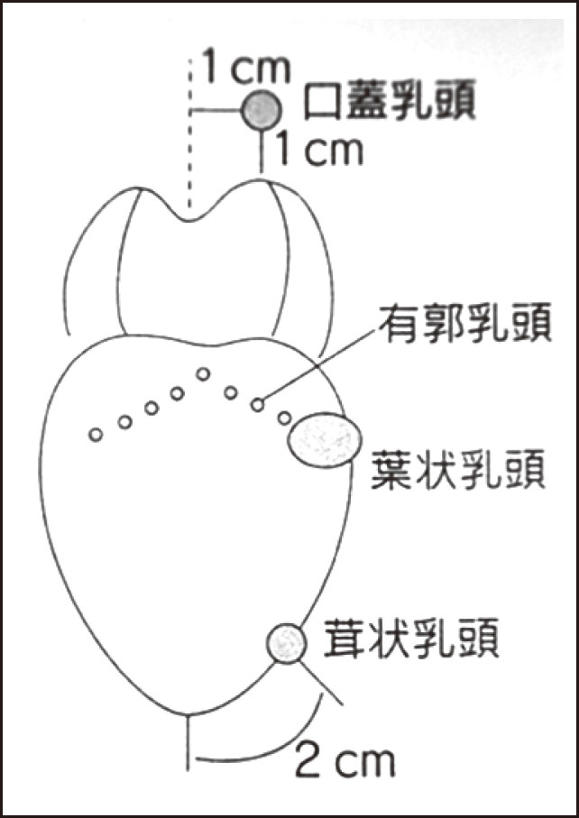 味覚検査部位(資料6)